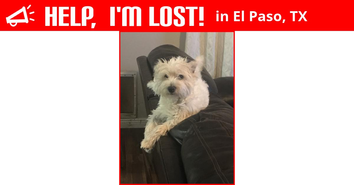 Lost Dog El Paso Texas Zuri