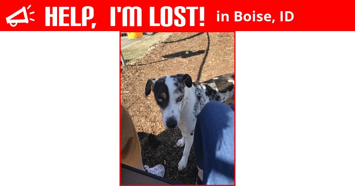 Lost Dog Boise Idaho Regina