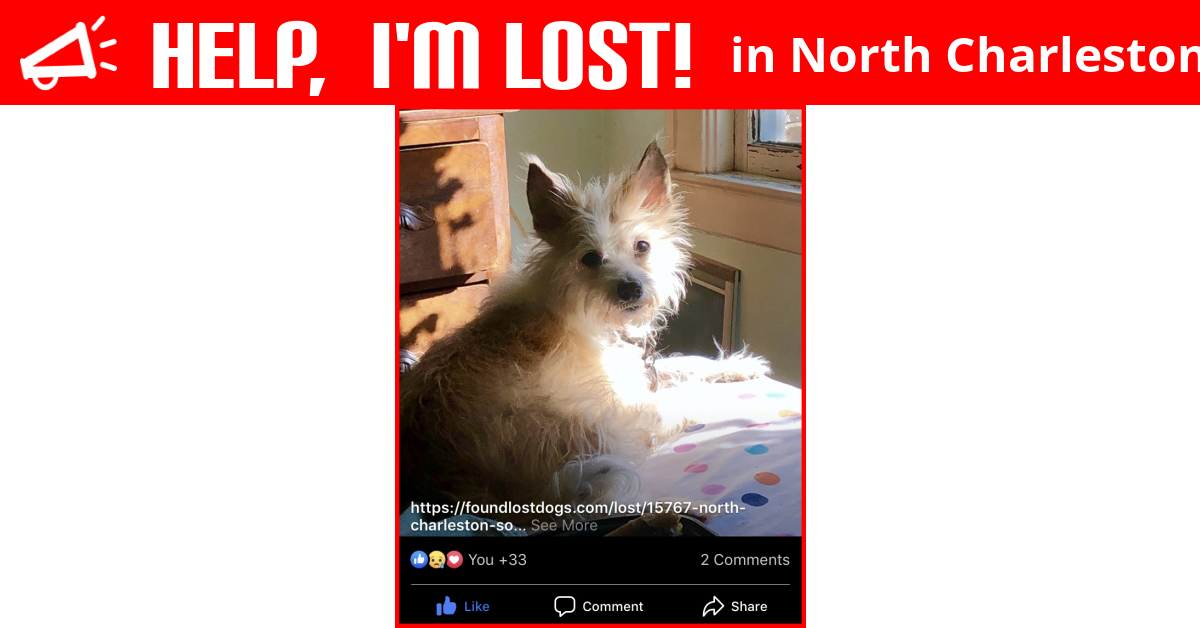 Lost Dog (North Charleston, South Carolina) - Winkie