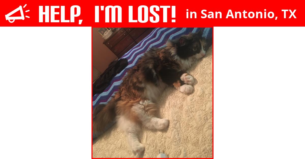 Lost Cat (San Antonio, Texas) - Callie