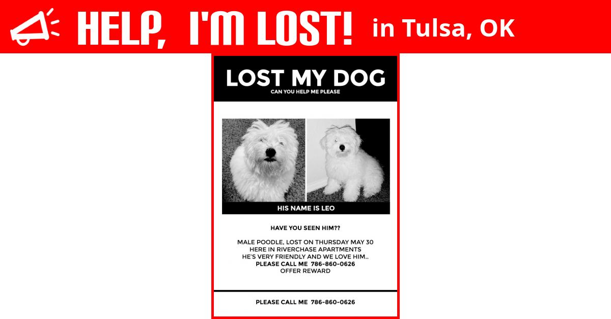Lost Dog (Tulsa, Oklahoma) - Leo