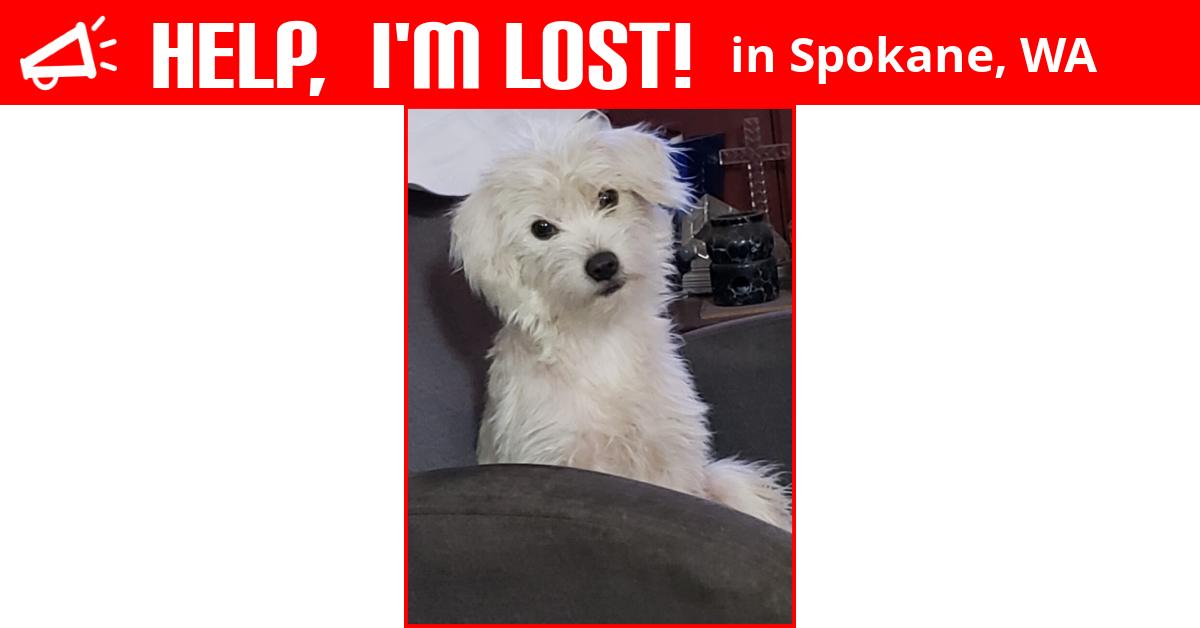 Lost Dog Spokane Washington Boo Boo