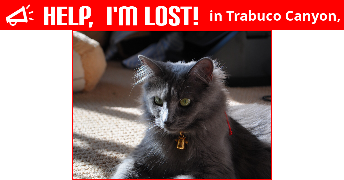 lost cat trabuco canyon california  noodle
