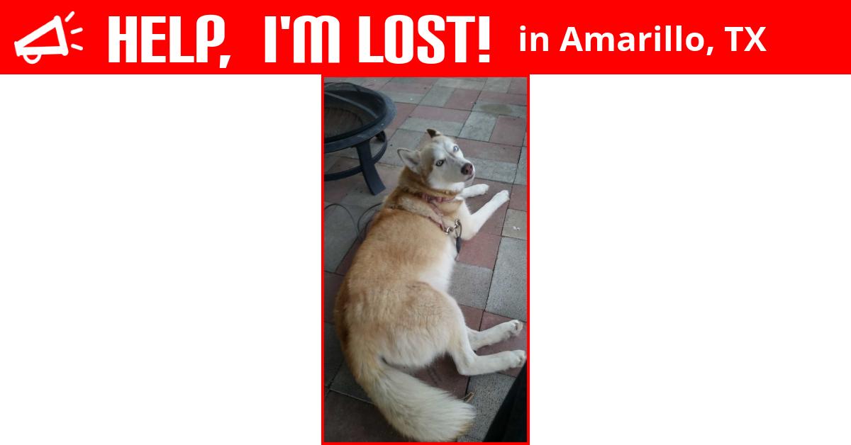Lost Dog (Amarillo, Texas) - Cicada