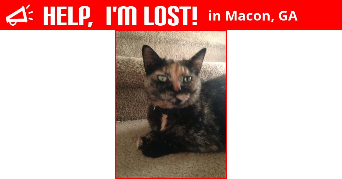 Lost Cat (Macon, Georgia) - Reeces