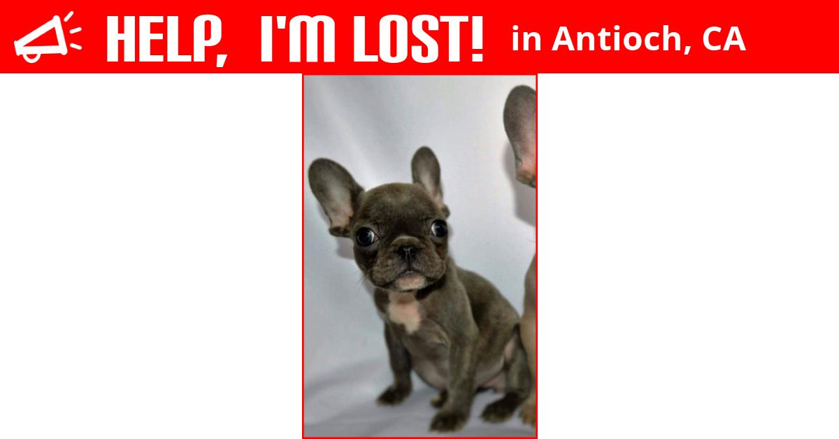 Lost Dog (Antioch, California) - Peanut