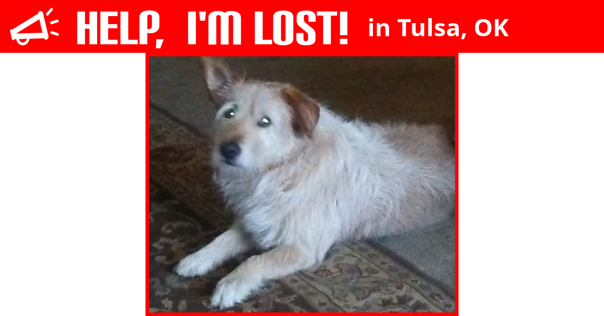Lost Dog (Tulsa, Oklahoma) - Buster