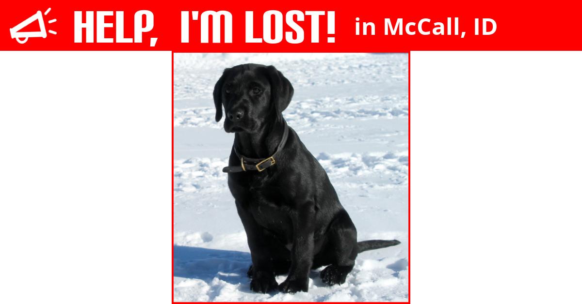 Lost Dog Mccall Idaho Remus