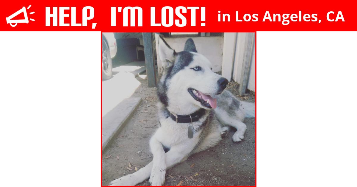 Lost Dog Los Angeles California Bandit
