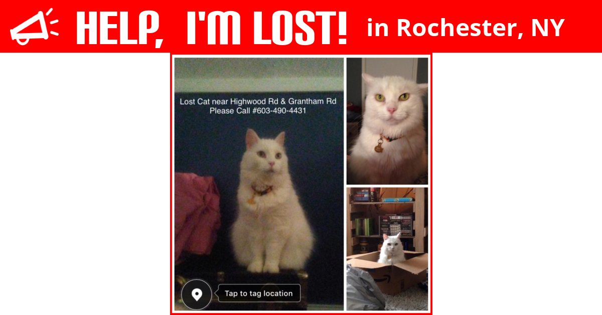 Lost Cat Rochester New York Izzy