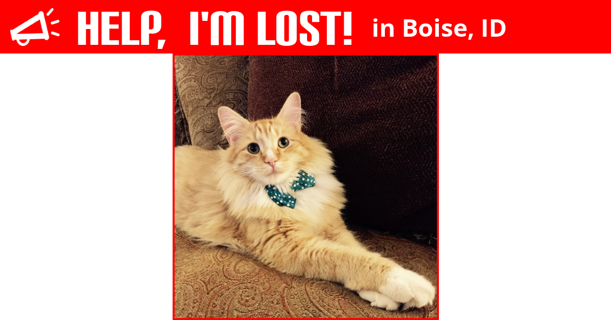 Lost Cat (Boise, Idaho) - Mr Lou