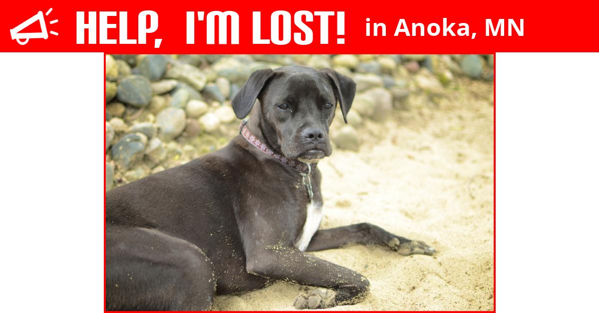 Lost Dog Anoka Minnesota Izzy