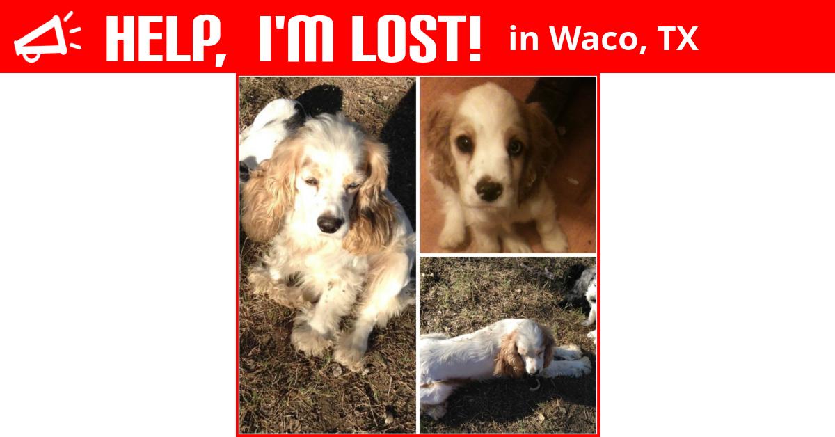 Lost Dog (Waco, Texas) - Blue