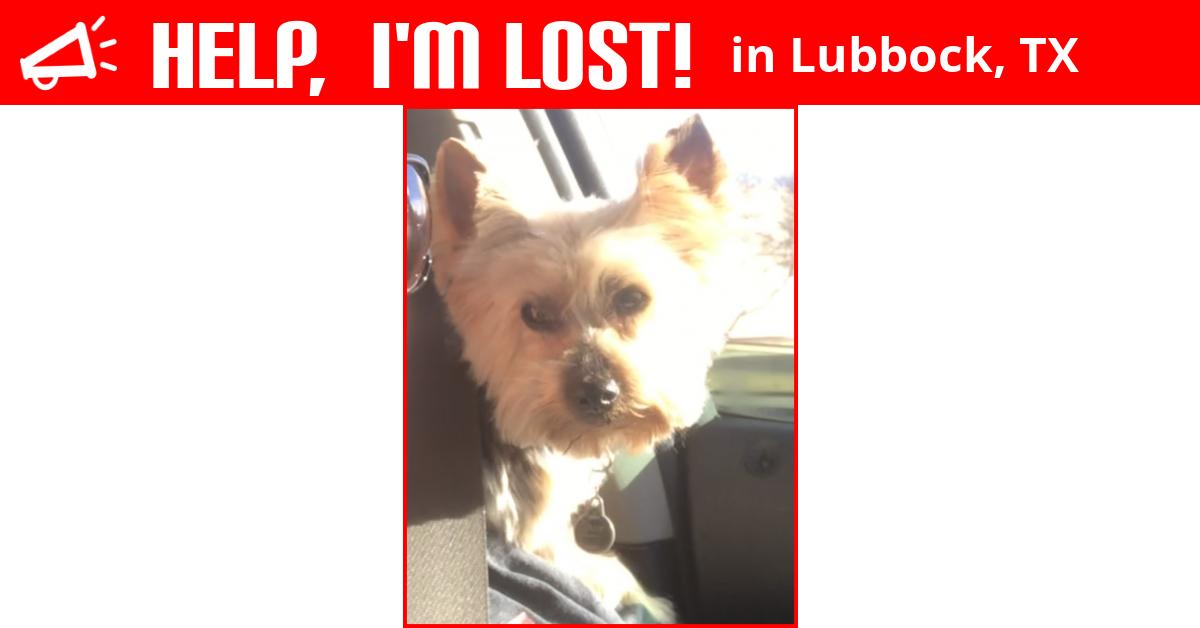 Lost dog lubbock texas ollie solutioingenieria Images