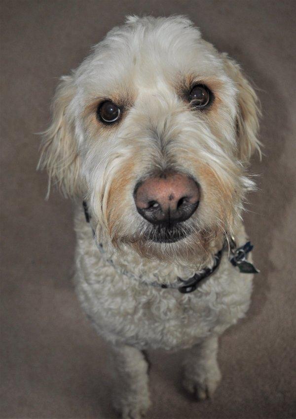 Lost Dog (Stockton, California) - Chance