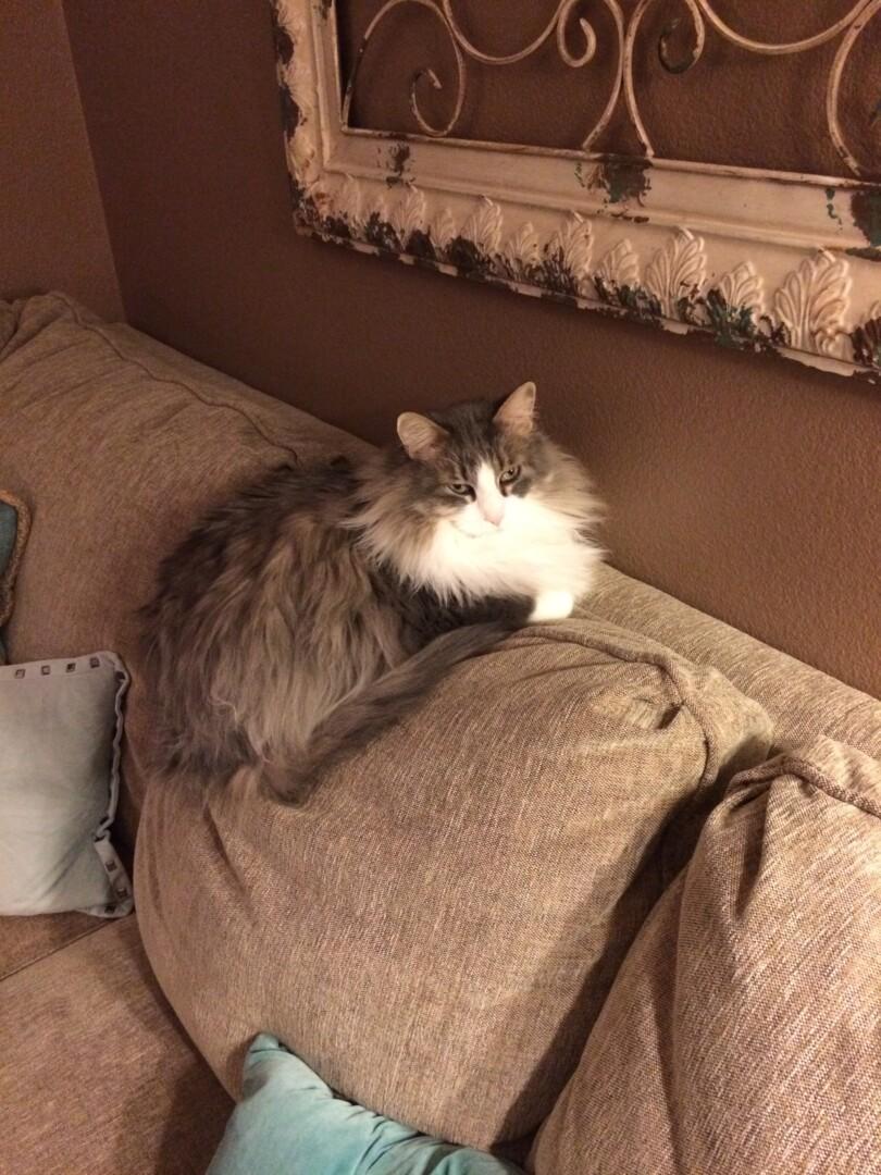 Lost Cat Fargo North Dakota Elvis