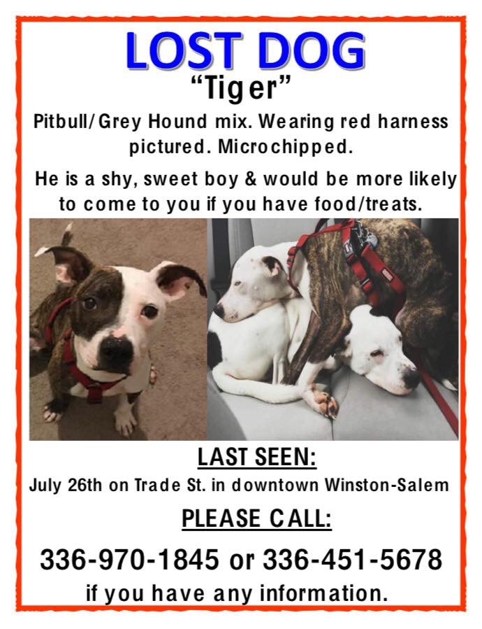 Lost Dog Winston Salem North Carolina Tiger