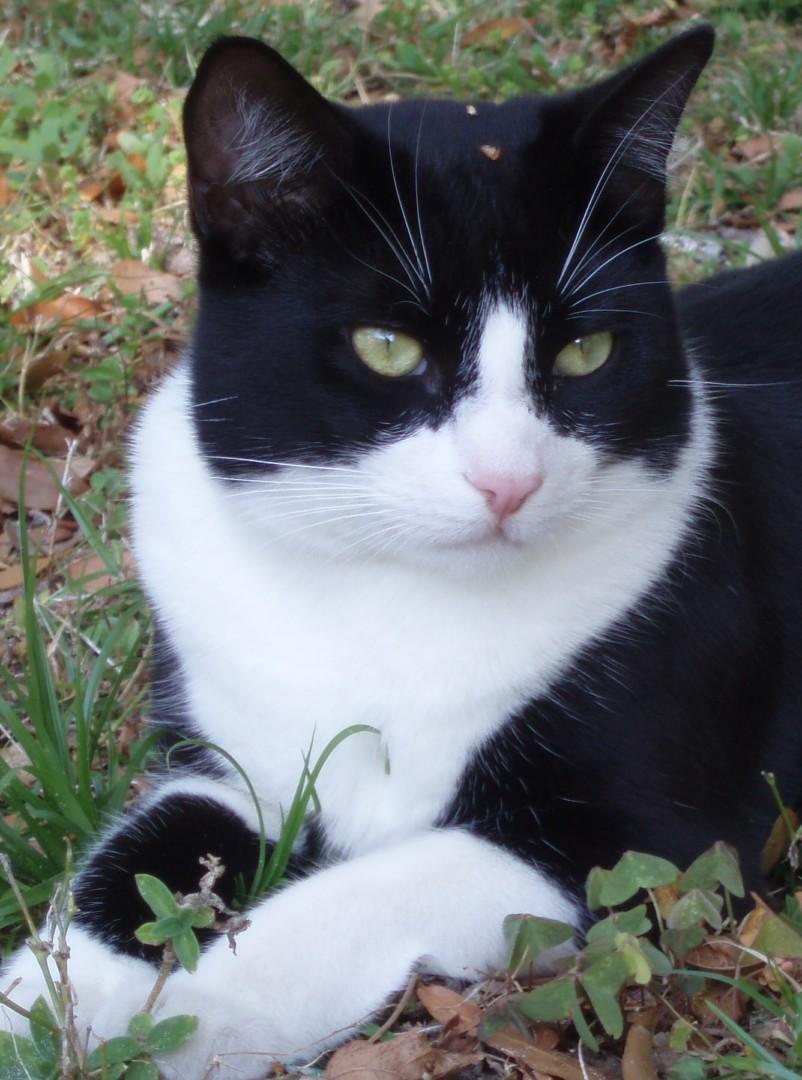 Lost Cat Colorado Springs Colorado Boaz