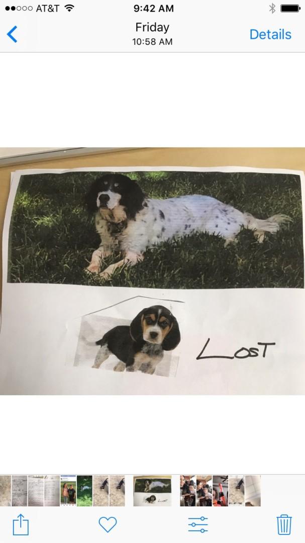 Lost Dog Statesville North Carolina Scarlett And Donald