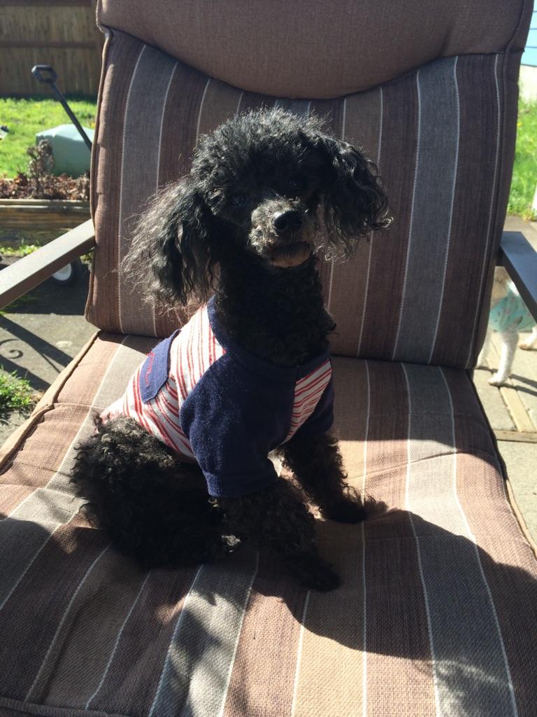Lost Dog Tacoma Washington Ricky