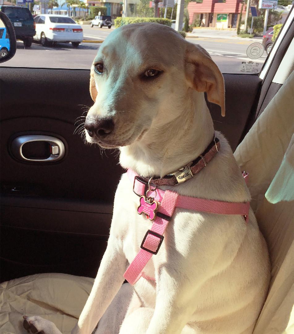 Lost Dog Saint Petersburg Florida Cammy