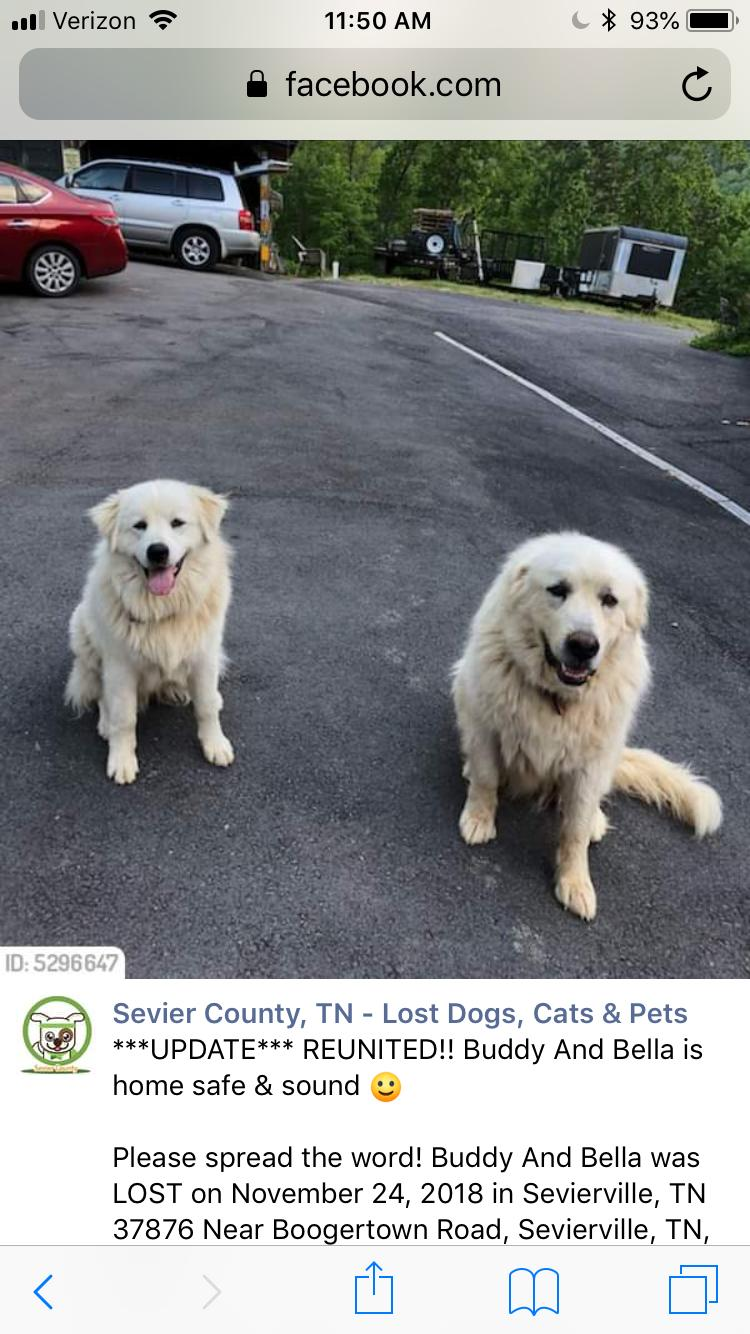 lost dog  sevierville  tennessee