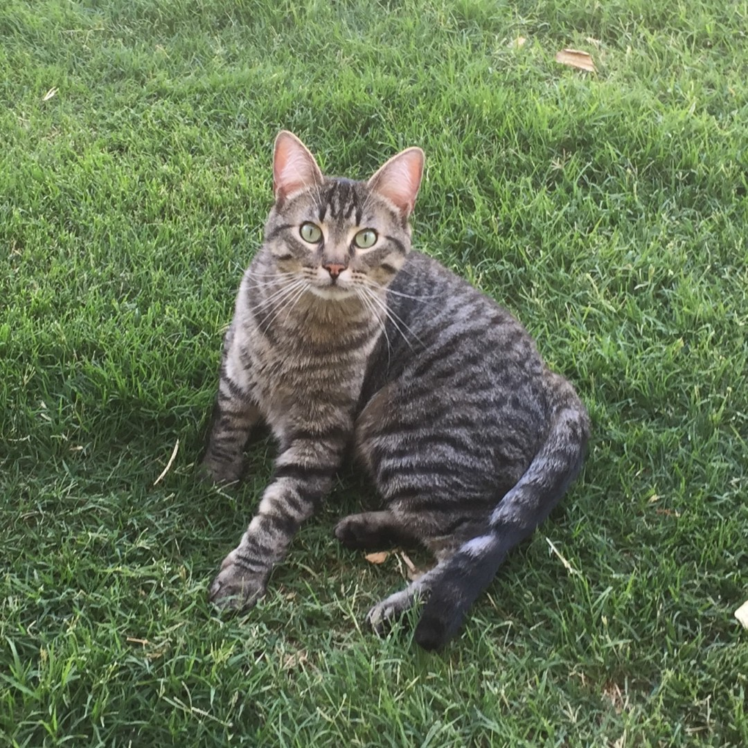 Renaissance Apartments In Lubbock Texas: Lost Cat (Lubbock, Texas)
