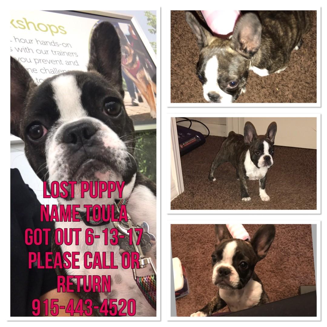 Lost Dog El Paso Texas Toula