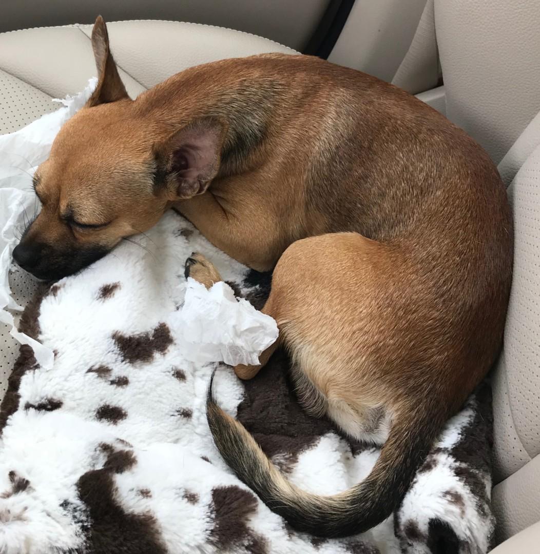 Lost Dog El Paso Texas Lucky