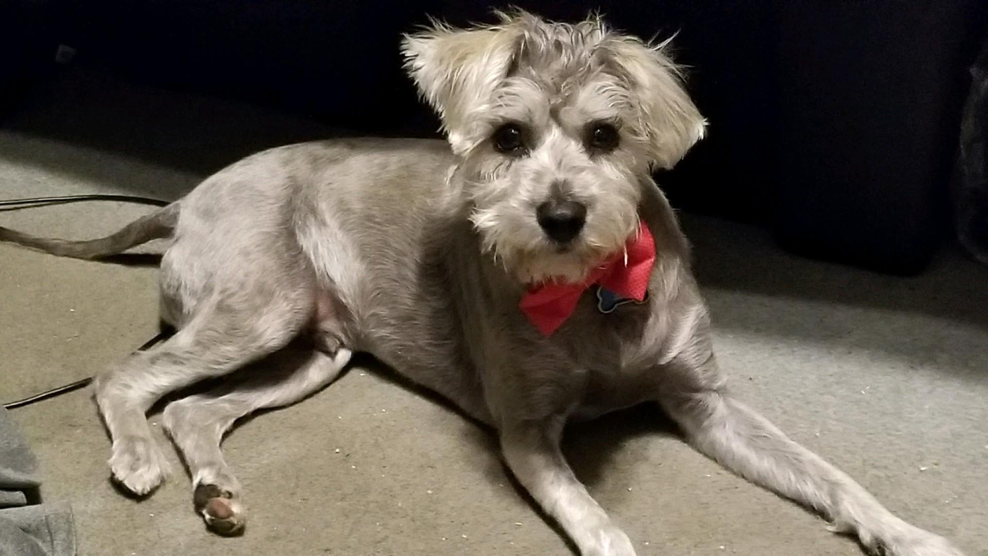 Lost Dog Fresno California Rex