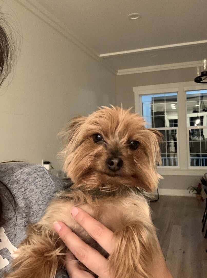 Lost Dog Odessa Florida Pipa
