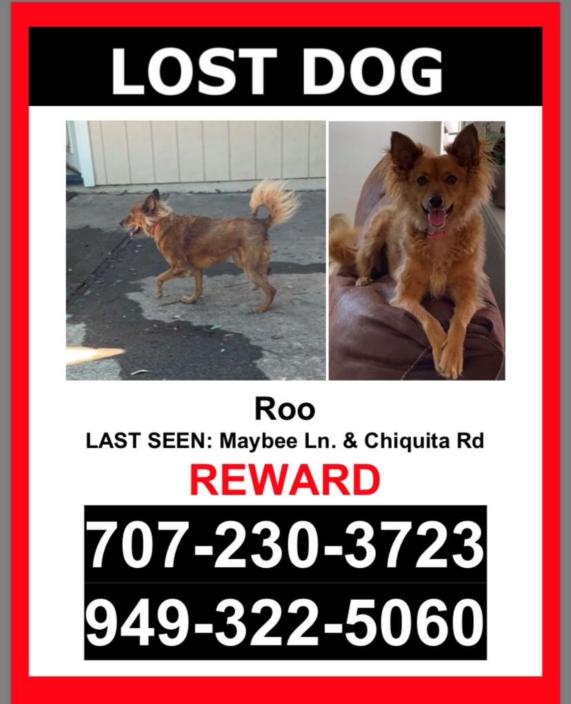 Lost Dog Healdsburg California Roo