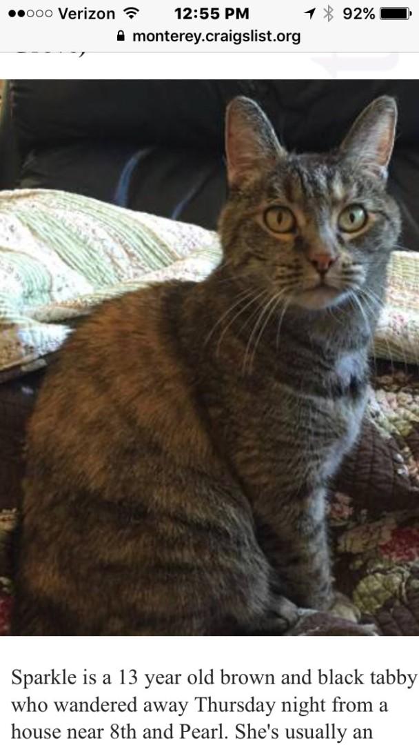 Lost Cat (Pacific Grove, California) - Sparkle