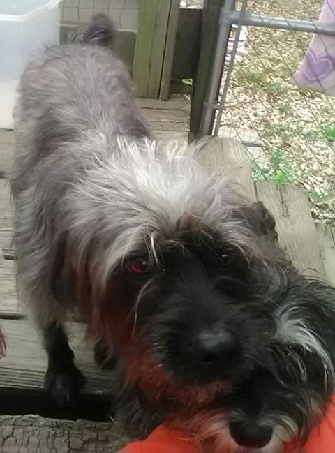 Lost Dog (Noblesville, Indiana) - Ramzi