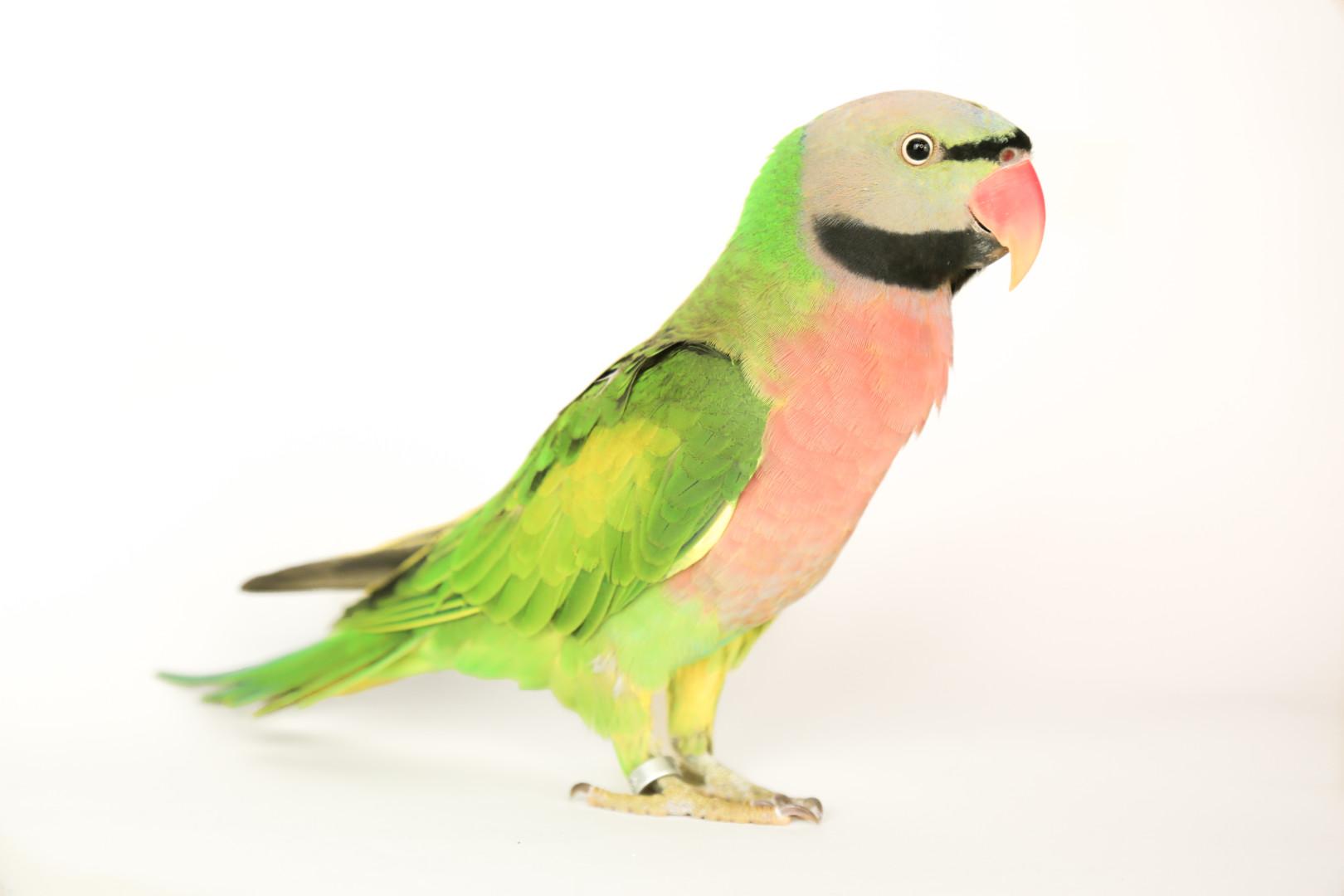 Lost Bird (Los Angeles, California) - Picasso